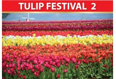 TULIP FESTIVAL 2_Best of North 9 Days