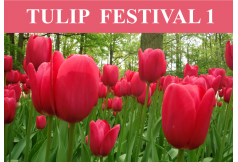 TULIP FESTIVAL 1 Wonders of The North