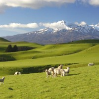 นิวซีแลนด์ดินแดนแห่งเมฆยาวสีขาว