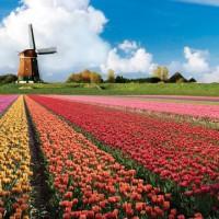 keukenhof-เนเธอร์แลนด์