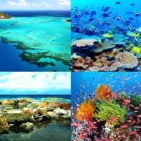 เกรตแบร์ริเออร์รีฟgreat-barrier-reef