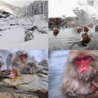 อุทยานลิงภูเขา-ลิงหิมะจิโกกุดานิ